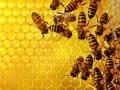راه های خانگی تشخیص عسل طبیعی اصل | مجله اينترنتی بيرکليک