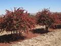 کود برای درخت پسته در مناطق مختلف