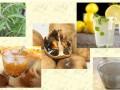 گیاهانی كه برای روزهداری مناسبترند - مجله اینترنتی فرزین